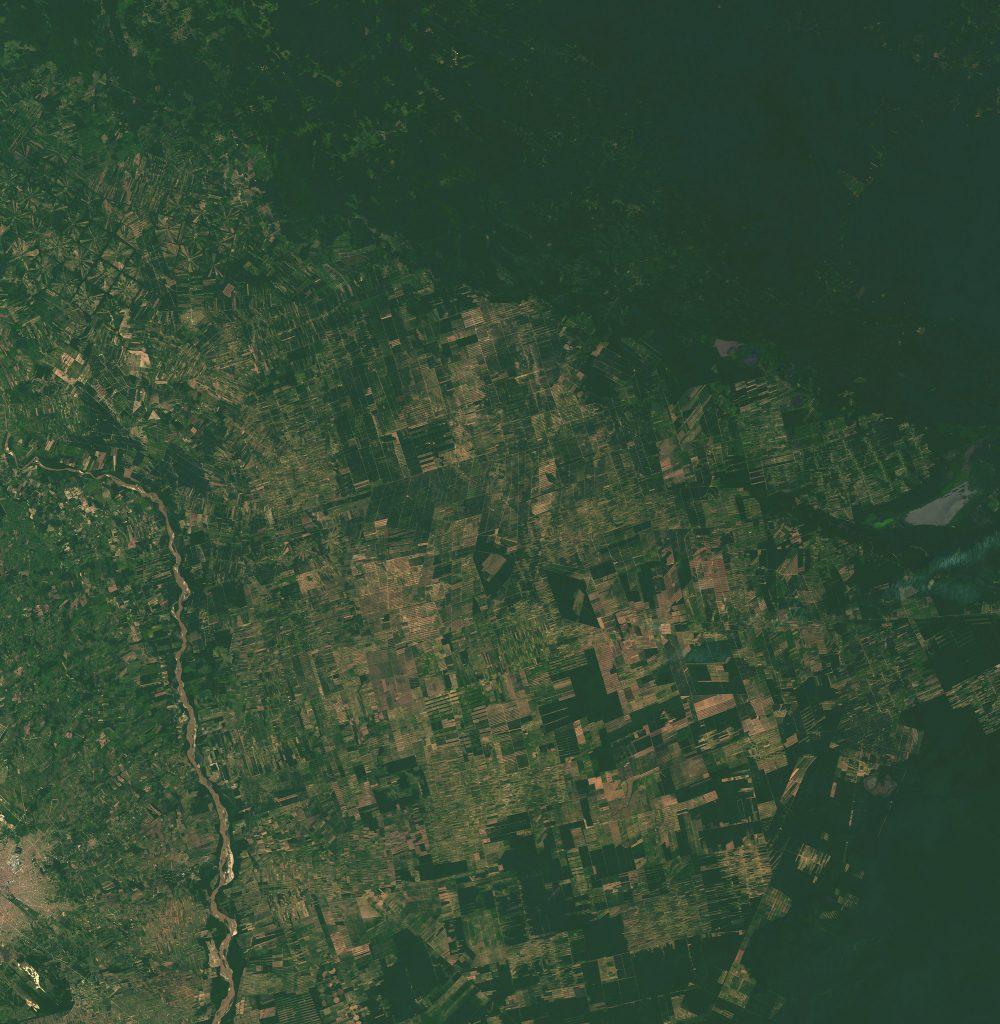Deforestación del parque chaqueño
