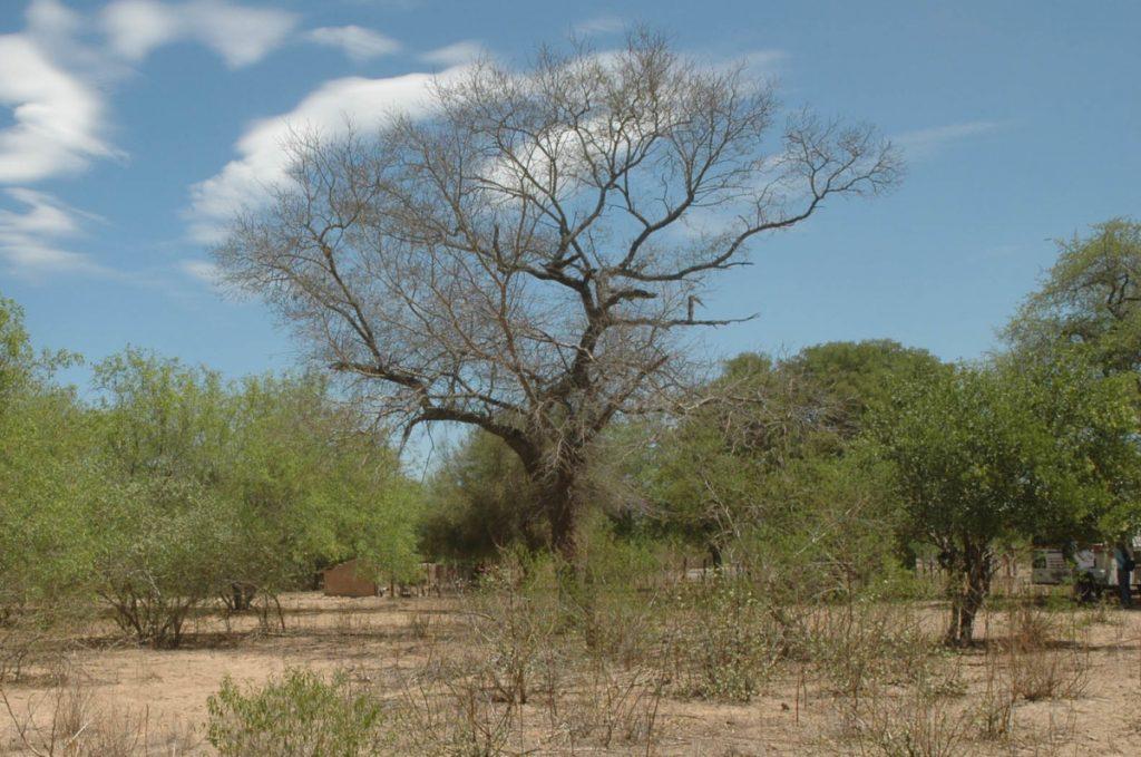 Gran Chaco seco